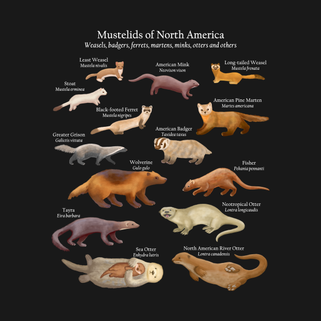 TeePublic: Mustelids of North America: Weasels, Otters, and Others