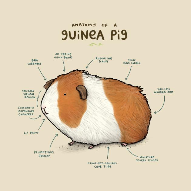 TeePublic: Anatomy of a Guinea Pig