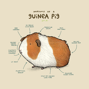 TeePublic: Anatomy of a Guinea Pig