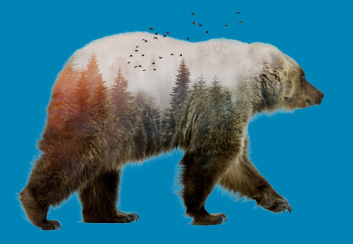 Design by Humans: Bear