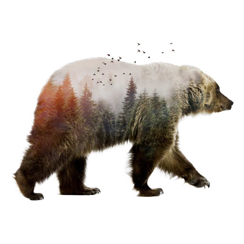 Pampling: Bear