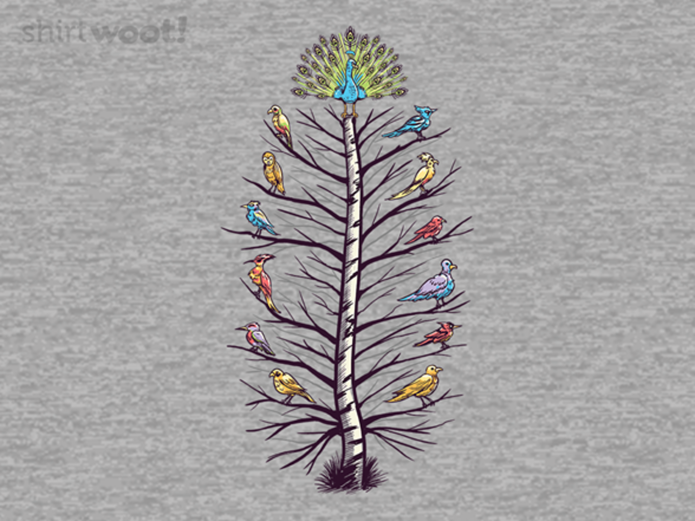 Woot!: Feather of Birds