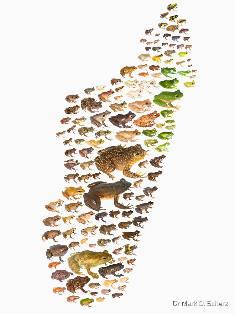 RedBubble: Madagascar's Frogs