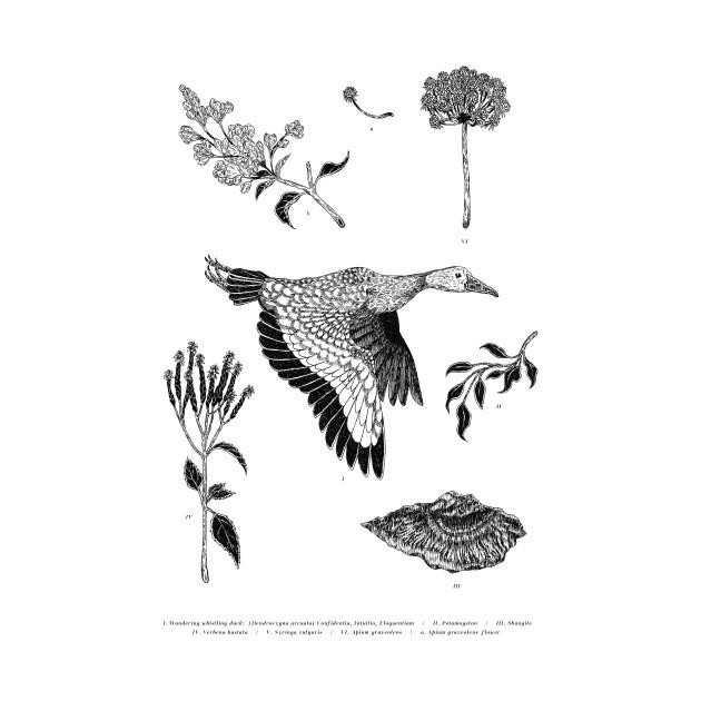 TeePublic: Wandering Duck
