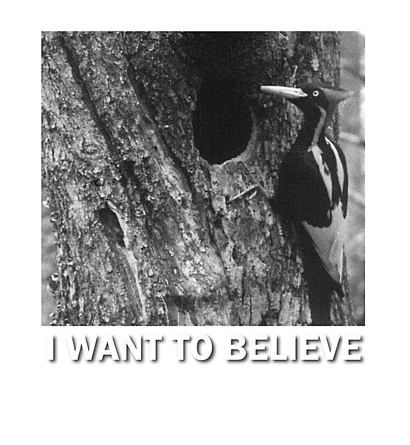 RedBubble: I want to believe | Ivory billed woodpecker