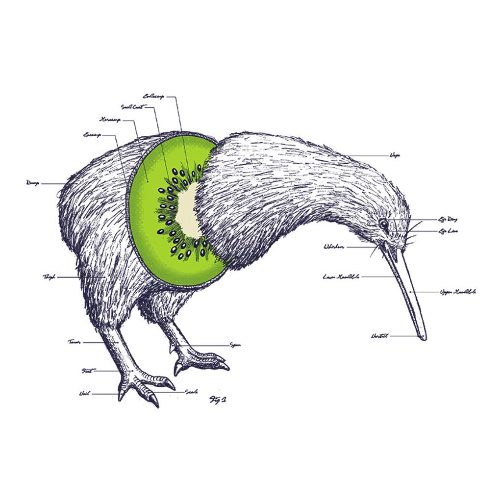 Pampling: Kiwi Anatomy