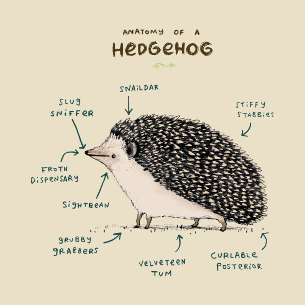 TeePublic: Anatomy of a Hedgehog