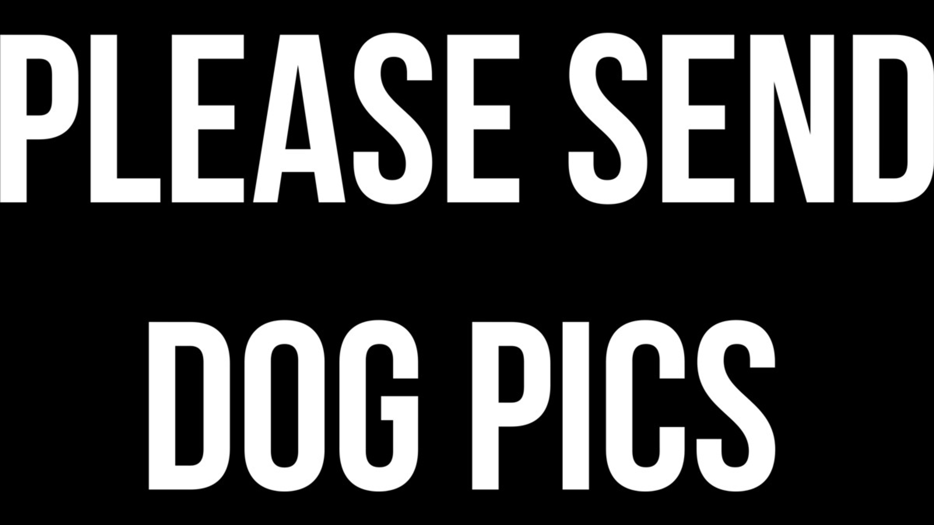 Design by Humans: Please Send Dog Pics Motivational Design