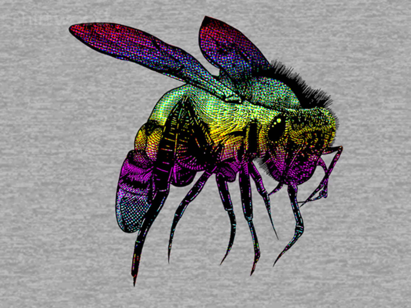 Woot!: Color Bee