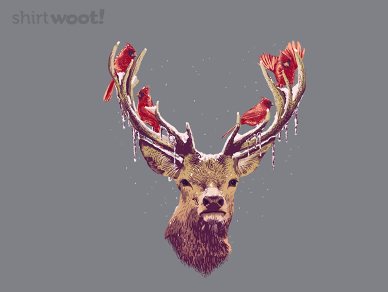 Woot!: Natural Ornaments - $15.00 + Free shipping