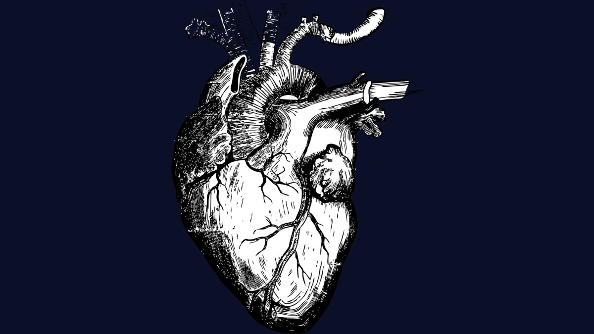 Design by Humans: The Human Heart