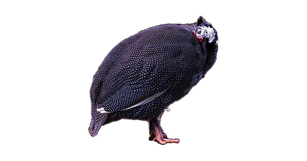 TeePublic: goose