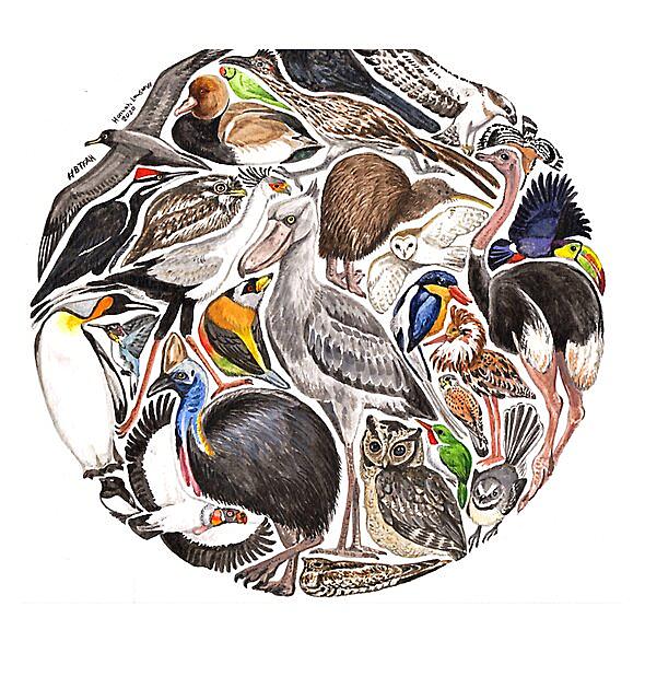 RedBubble: BTFAH - a world of birds