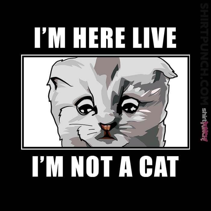 ShirtPunch: Zoom Cat