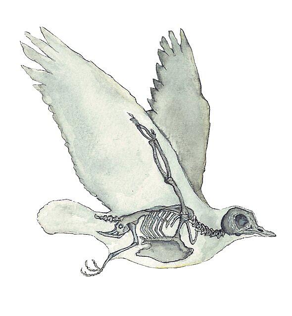 RedBubble: Bird Skeleton: Animal Dove Anatomy