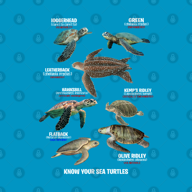 TeePublic: Know Your Sea Turtles Shirt