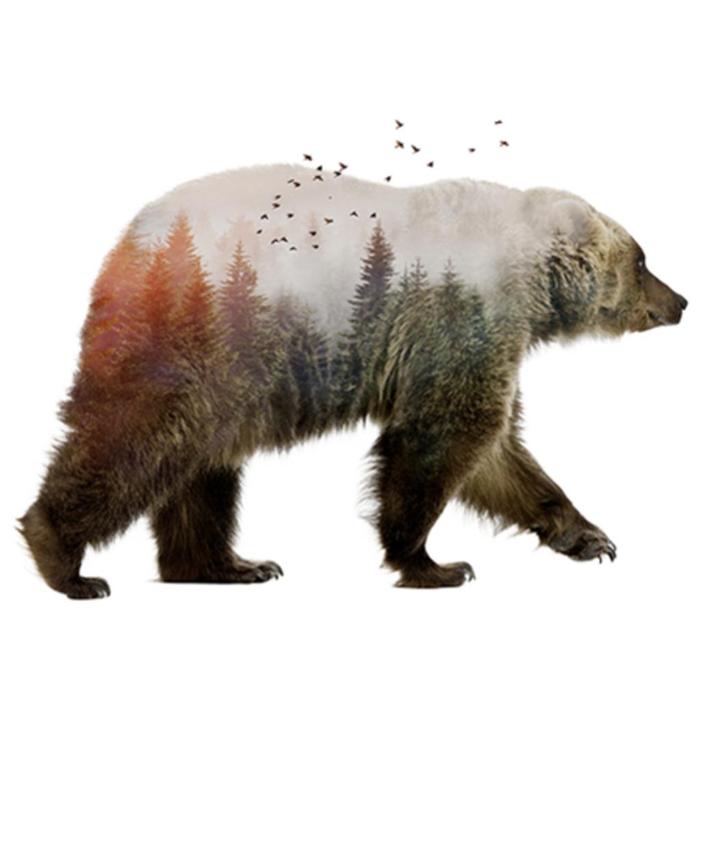 Qwertee: Bear