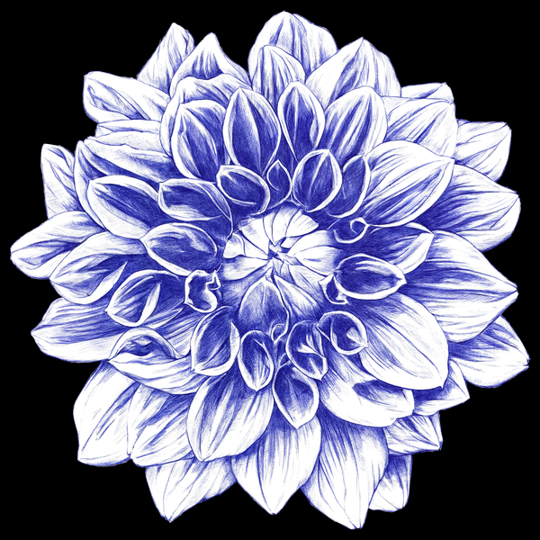 NeatoShop: Ballpoint Blue Dahlia