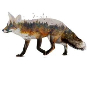 Qwertee: Fox Nature