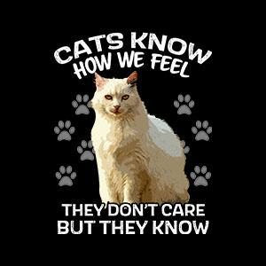 BustedTees: Cats Don't Care