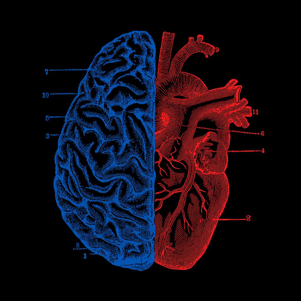 TeeTee: Heart and Brain