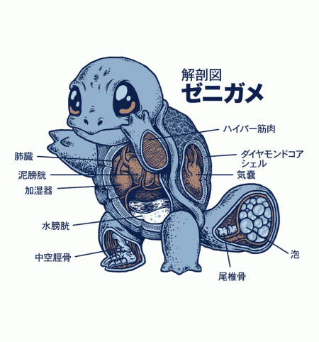 BustedTees: Squirtle Anatomy