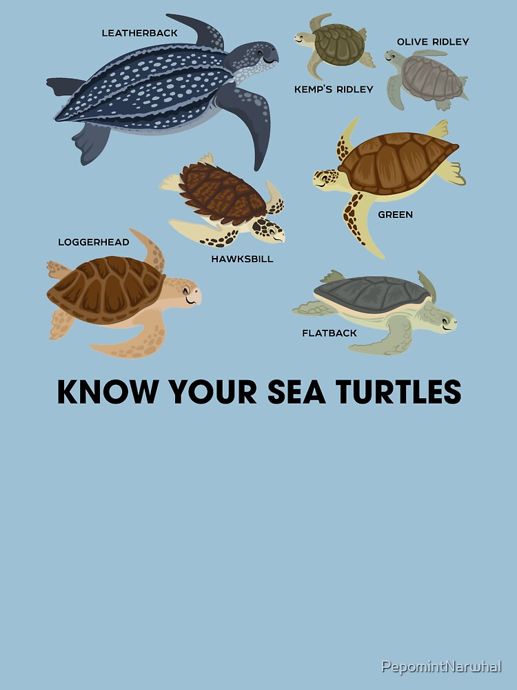 RedBubble: Know Your Sea Turtles